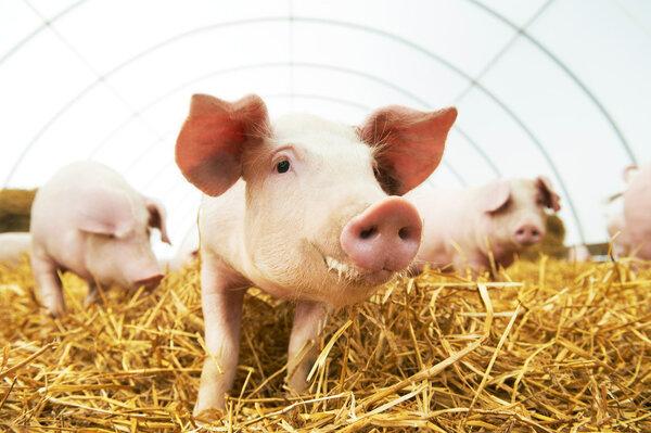 猪肉价格上涨,少吃点能降低结直肠癌风险