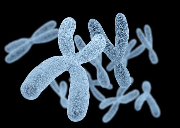 多篇文章揭示染色体的奥秘!