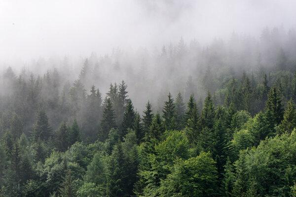 砍伐森林、物种灭绝更有可能