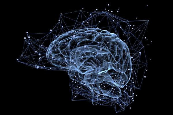 多篇文章聚焦人类大脑记忆的奥秘!