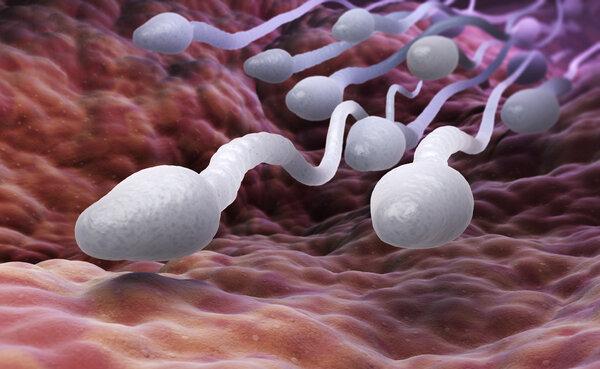 """怎样的精子才算是""""完美精子""""?"""