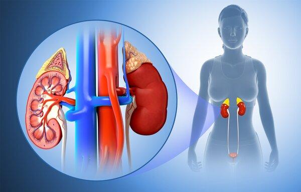 肾脏损伤会提高死亡风险