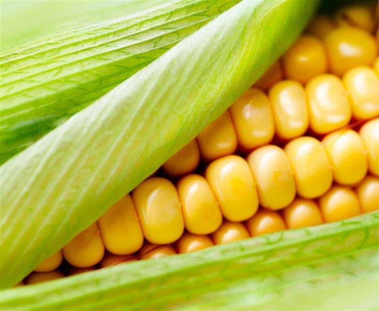玉米減肥效果好嗎