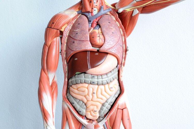 人体最没用的5种器官,少了哪个都能活!智齿是其中一个