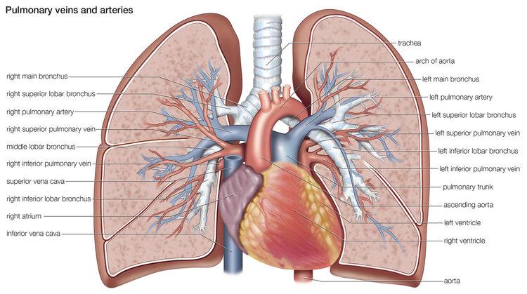 世界慢性阻塞性肺病日!如何预防慢性阻塞性肺病